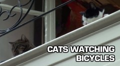 cats-watching-bicycles