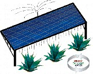 agave-crops-and-solar-power