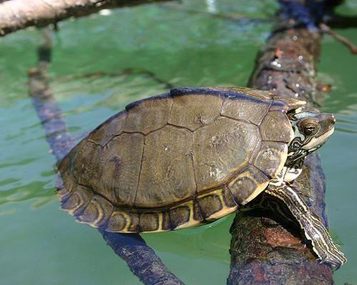 9 недавно открытых видов