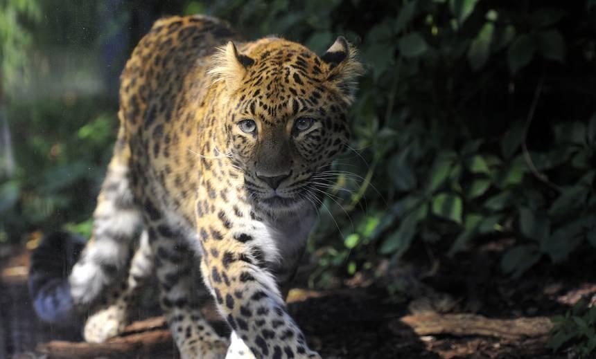 Лесовосстановление в Китае возвращает редких животных
