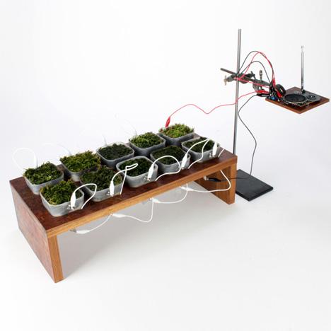 Мох - FM - первое в мире радио на энергии растений. Facepla.net самые свежие ноости экологии