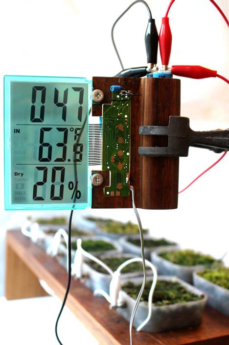 Мох - FM - первое в мире радио на энергии растений