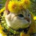 Кошка весенняя