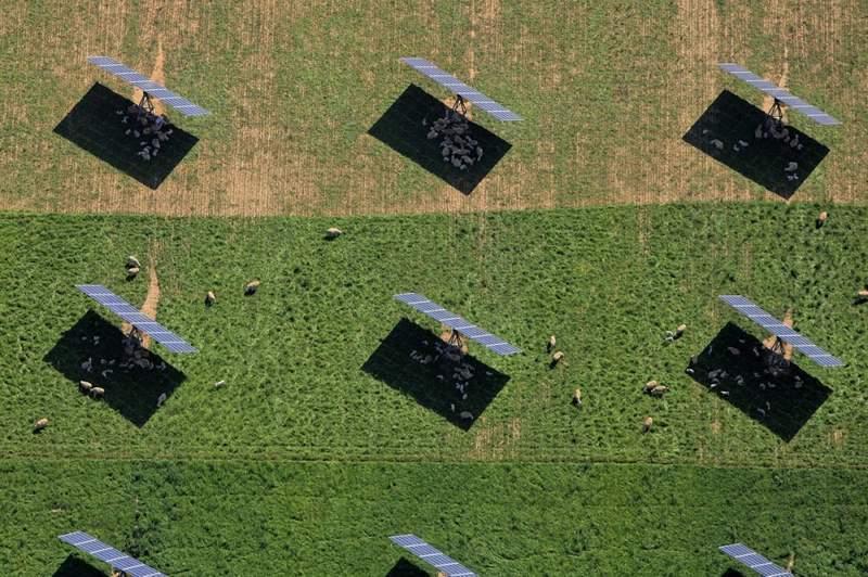 Овцы прячутся в тени солнечных батарей
