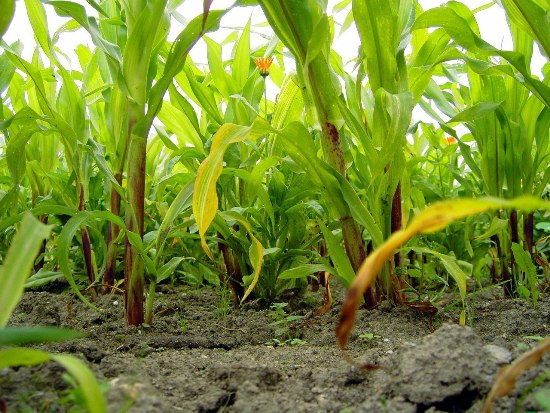 Звуки растений